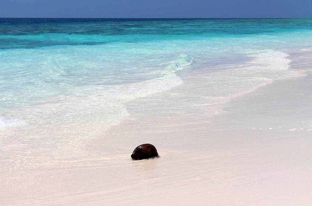 Malediven Beach Inselnauten