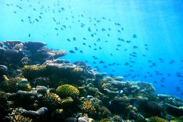 Riffschutz auf den Malediven
