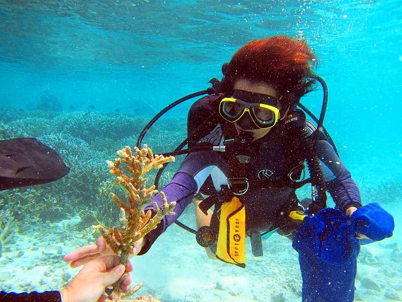 coral doctors sonnencreme malediven