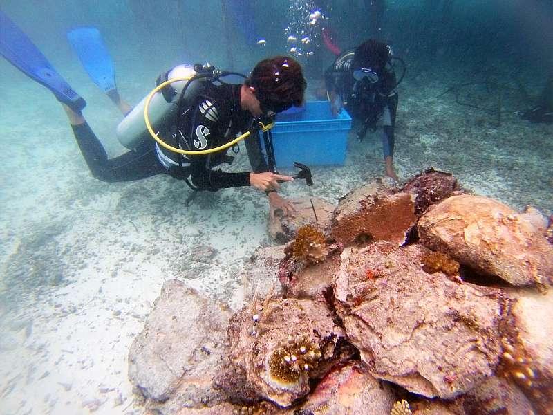 coral doctors sonnenschutz malediven