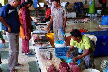 Malediven Fischen
