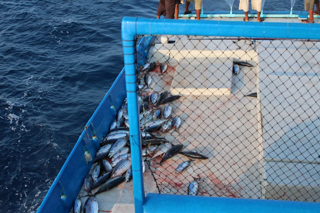 malediven-tuna