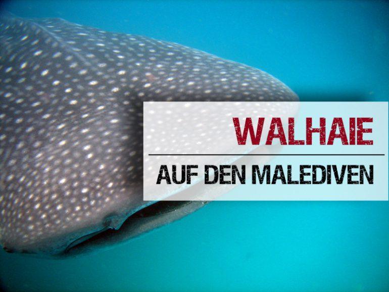 Schwimmen Walhai Malediven Geheimtipps