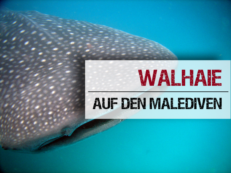 Welches Atoll Walhaie Malediven