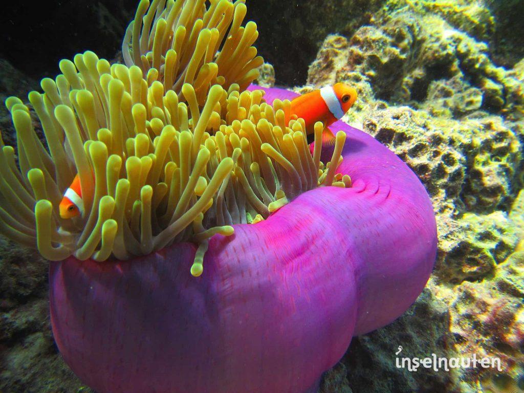 Sri lanka malediven kombi flug