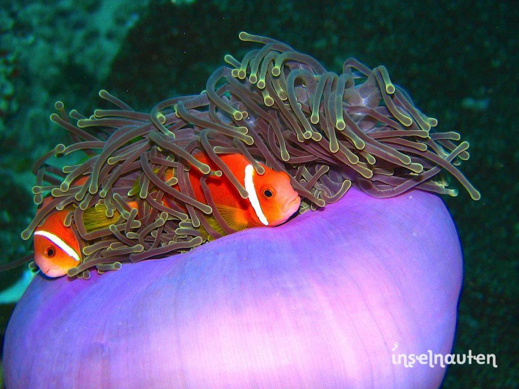 Sri lanka malediven wohin