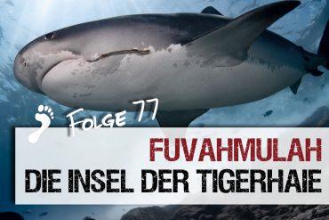 Tigerhaie Tauchen auf den Malediven